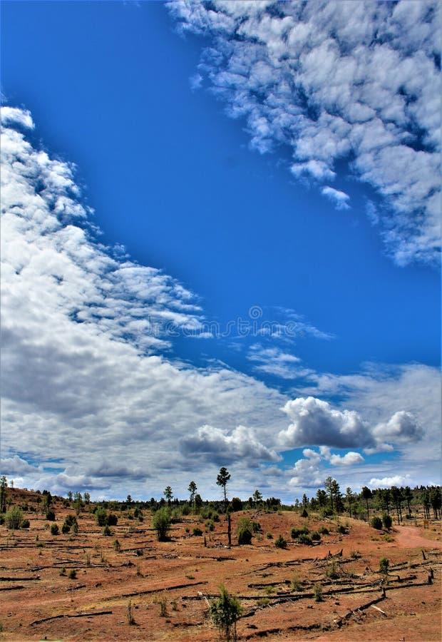 Heber Overgaard, le comté de Navajo, réserve forestière de Sitgreaves, Arizona, Etats-Unis photographie stock libre de droits