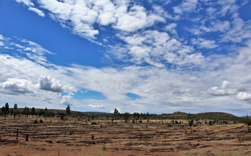 Heber Overgaard, le comté de Navajo, réserve forestière de Sitgreaves, Arizona, Etats-Unis photos libres de droits