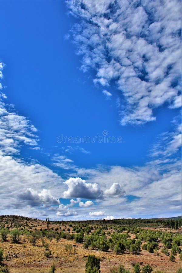 Heber Overgaard, le comté de Navajo, réserve forestière de Sitgreaves, Arizona, Etats-Unis images stock