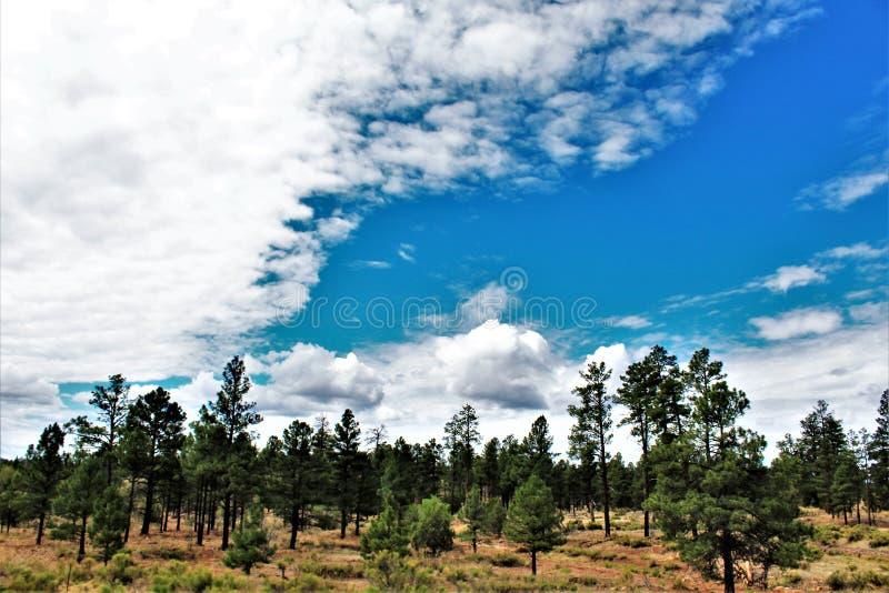Heber Overgaard, le comté de Navajo, réserve forestière de Sitgreaves, Arizona, Etats-Unis image libre de droits