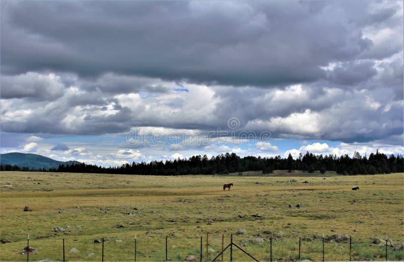 Heber Overgaard, le comté de Navajo, réserve forestière de Sitgreaves, Arizona, Etats-Unis photographie stock
