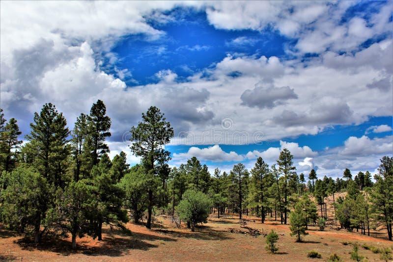 Heber Overgaard, le comté de Navajo, réserve forestière de Sitgreaves, Arizona, Etats-Unis photo stock