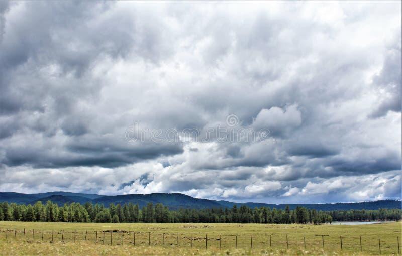 Heber Overgaard, Navajo County, Sitgreaves nationalskog, Arizona, Förenta staterna royaltyfri bild