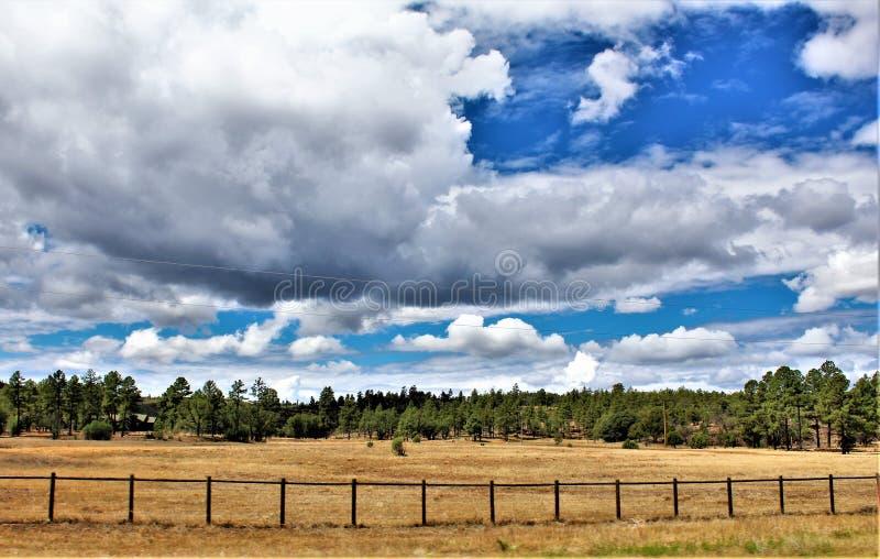Heber Overgaard, Navajo County, Sitgreaves nationalskog, Arizona, Förenta staterna arkivbilder