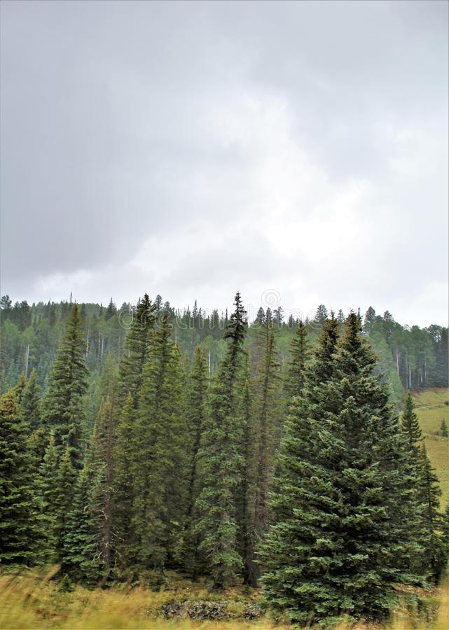 Heber Overgaard, Navajo County, Sitgreaves nationalskog, Arizona, Förenta staterna royaltyfria bilder