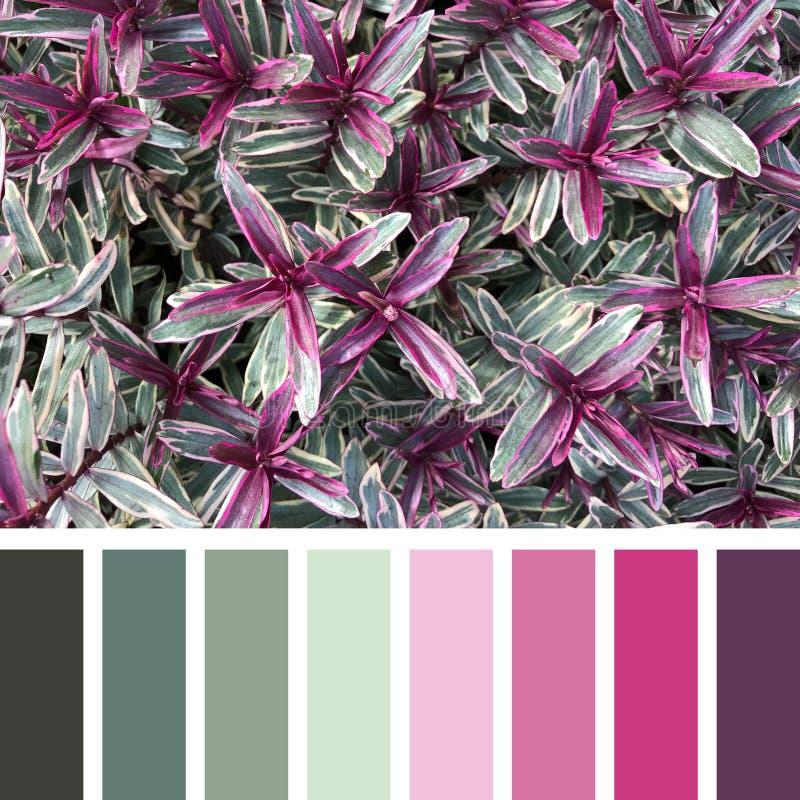 Hebes färgpalett i rosa och grönt arkivfoton