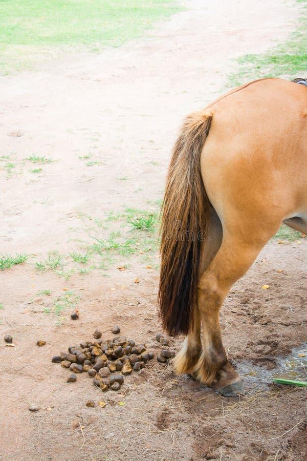 Heces del caballo imágenes de archivo libres de regalías