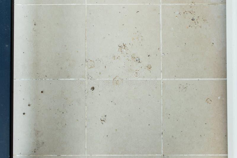 Heces del pájaro y piso sucio fotografía de archivo libre de regalías