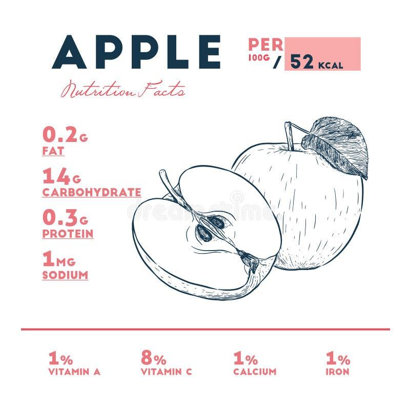 Hechos de la manzana, vector de la nutrición del bosquejo del drenaje de la mano ilustración del vector