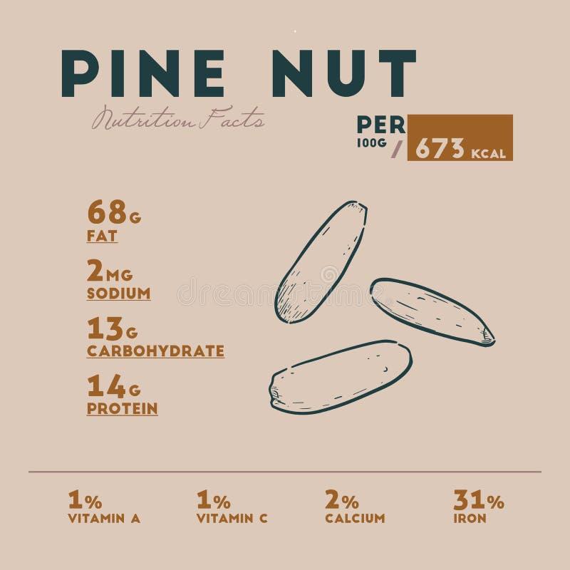 Hechos de la nuez de pino, vector de la nutrición del drenaje de la mano stock de ilustración