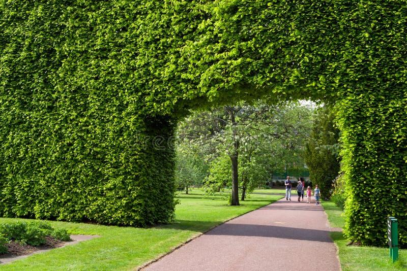 Hecke im botanischen Garten, Edinburgh stockfoto