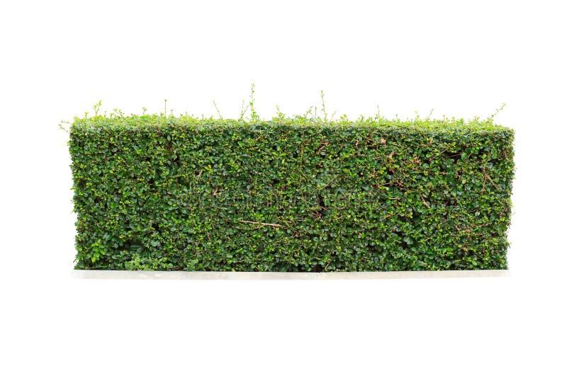 hecke lokalisiert stockbild bild von gr n gardening. Black Bedroom Furniture Sets. Home Design Ideas