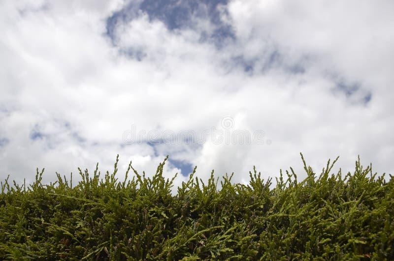 Hecke und Himmel stockfotos