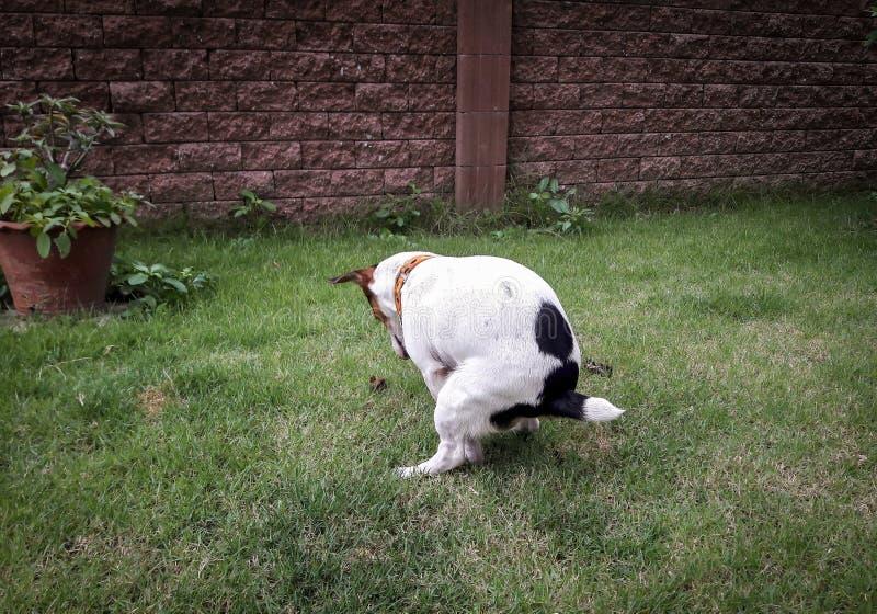 Heckhund lizenzfreies stockfoto