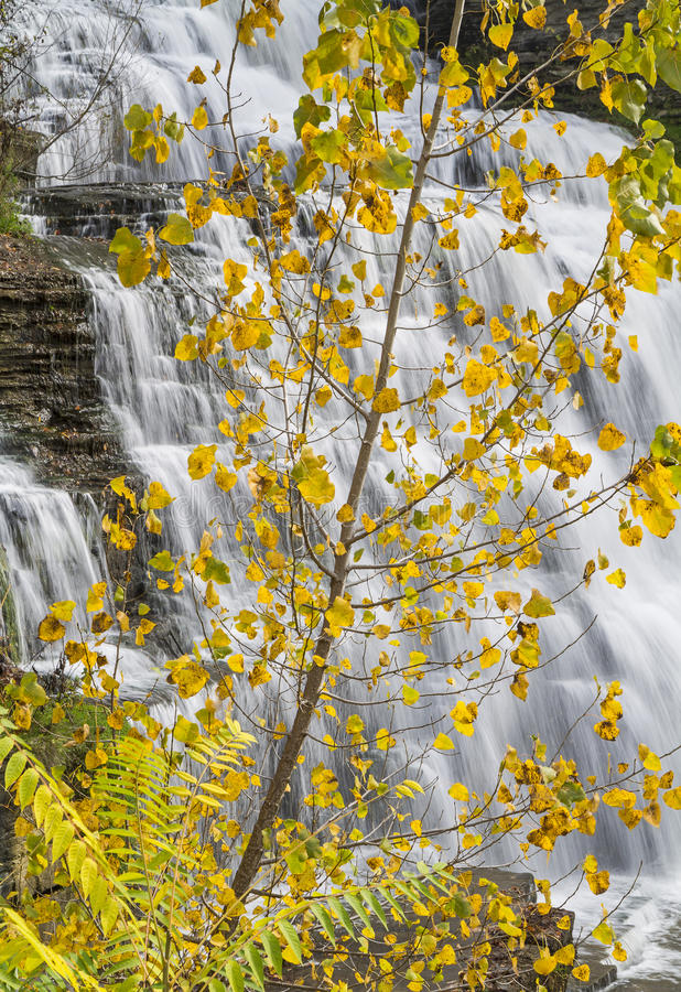 Hector Falls Yellow Leaves fotos de stock