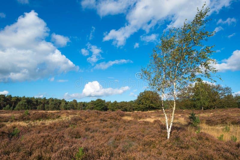 Hed som klänger en skog fotografering för bildbyråer