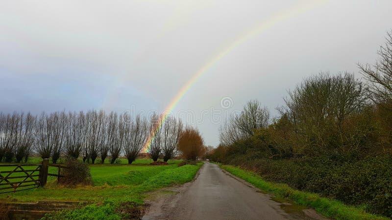 Hed Somerset Levels,inSomerset, England för starrgräs för västraSedgemoororvästra, royaltyfria bilder