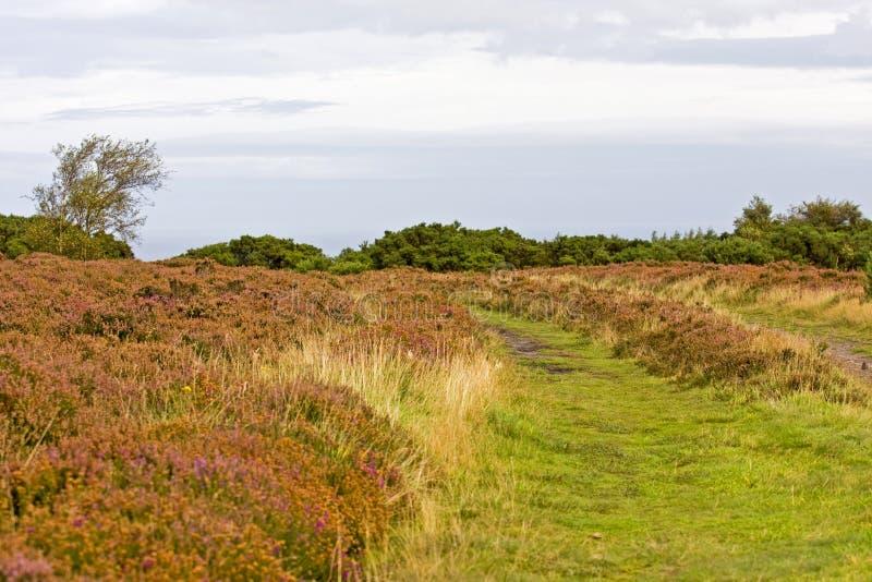 Heder i North Yorkshire - England royaltyfria foton