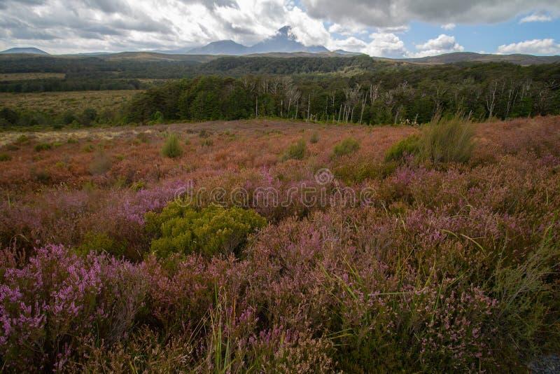 Hedfält med purpurfärgat, grönt och orange landskap för collorfull royaltyfria bilder