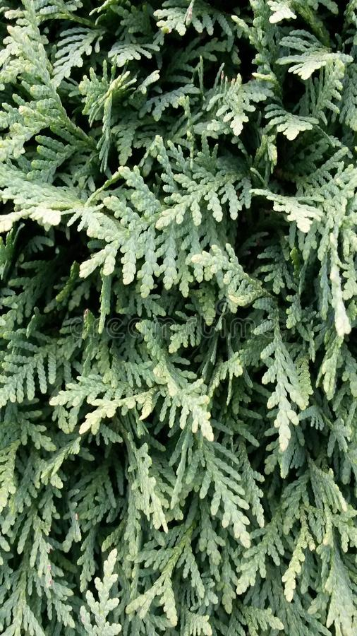 hedge fotografia de stock