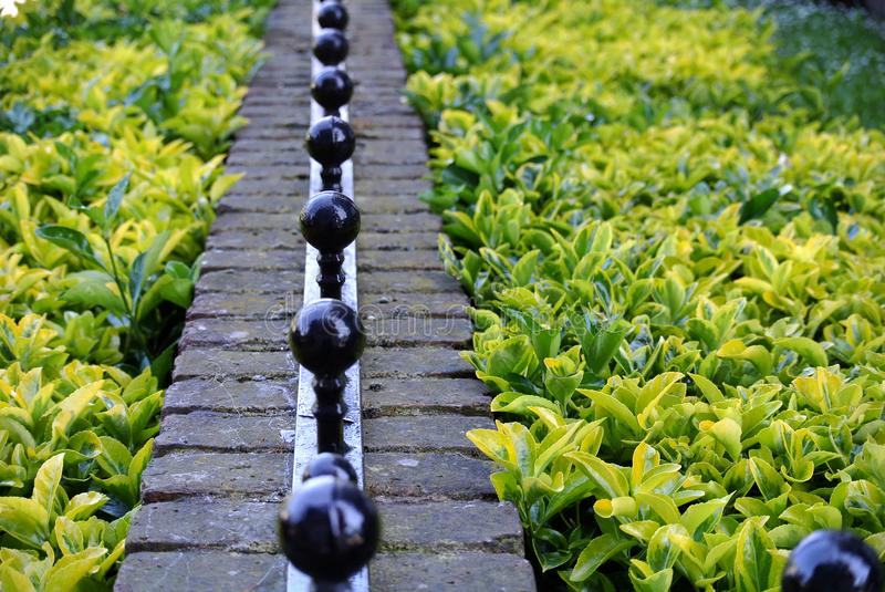 Hedge and boundary wall. The hedge and boundary wall royalty free stock photos