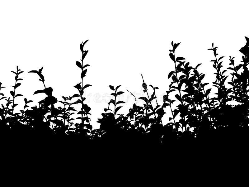 Download Hedge bw stock illustration. Illustration of garden, leaves - 466608