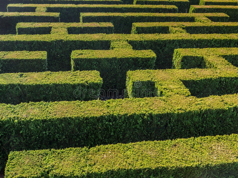 Hedge formed maze royalty free stock image