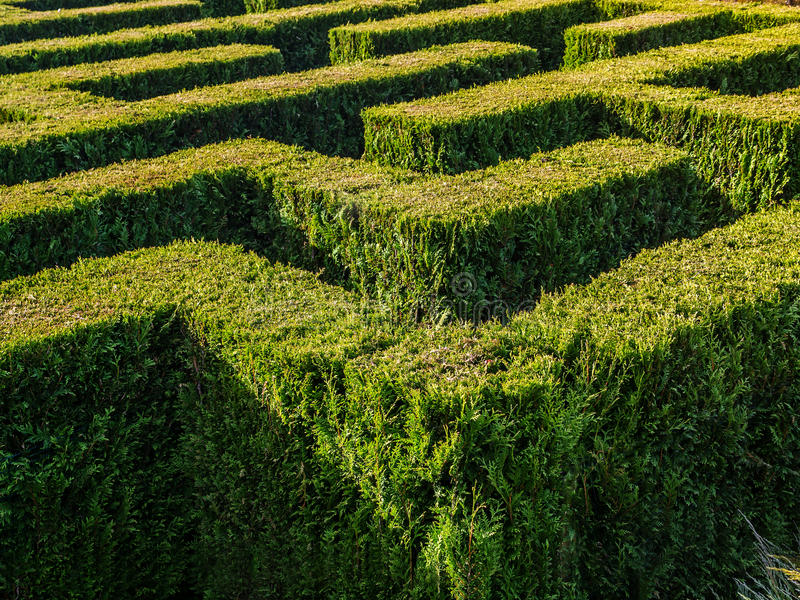 Hedge formed maze royalty free stock photos