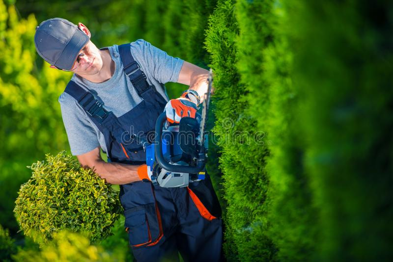 Hedge Trimmer Works. Gardener with Gasoline Hedge Trimmer Shaping Wall of Thujas stock photos