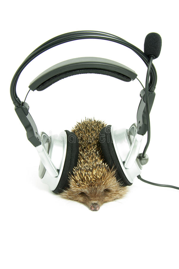 Download Hedgehog stock photo. Image of music, device, white, silver - 10650766