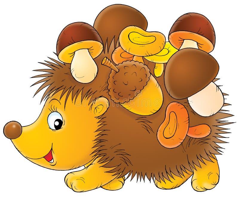 hedgehog stock photography  image 2030382