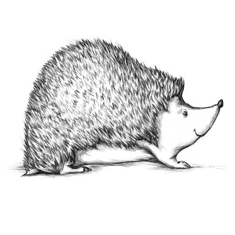 hedgehog vector illustratie