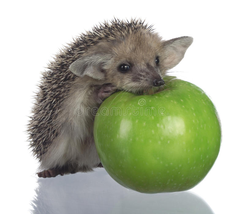 Download Hedgehog And Apple Stock Image - Image: 10014421