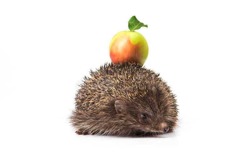 Hedgehog com maçã verde foto de stock