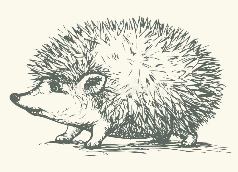 hedgehog Desenho do vetor ilustração royalty free