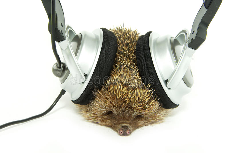Download Hedgehog in headphones stock image. Image of background - 11050519