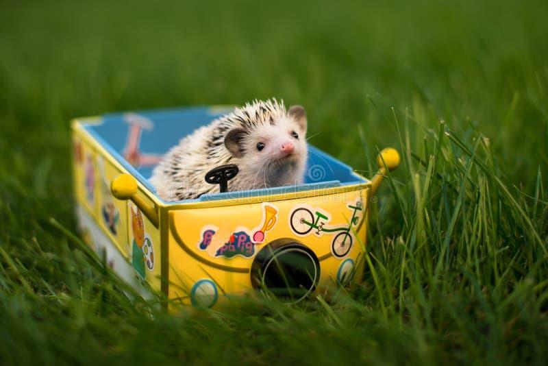 Hedgehog in a typewriter stock photos