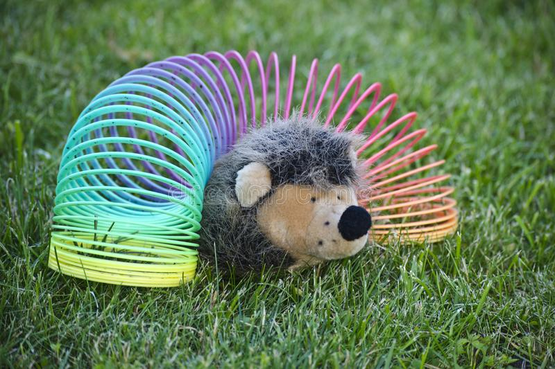 Hedgehog in the slinky on the lawn stock photo