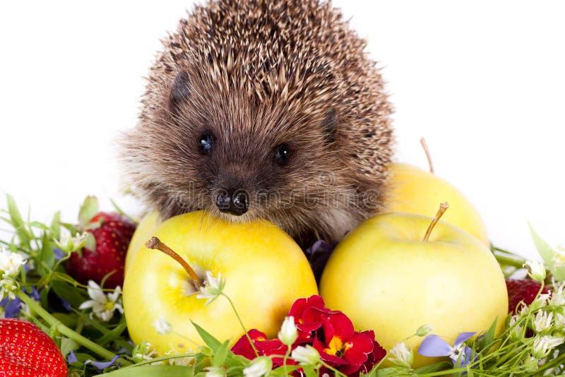Hedgehog, wild flowers and apples