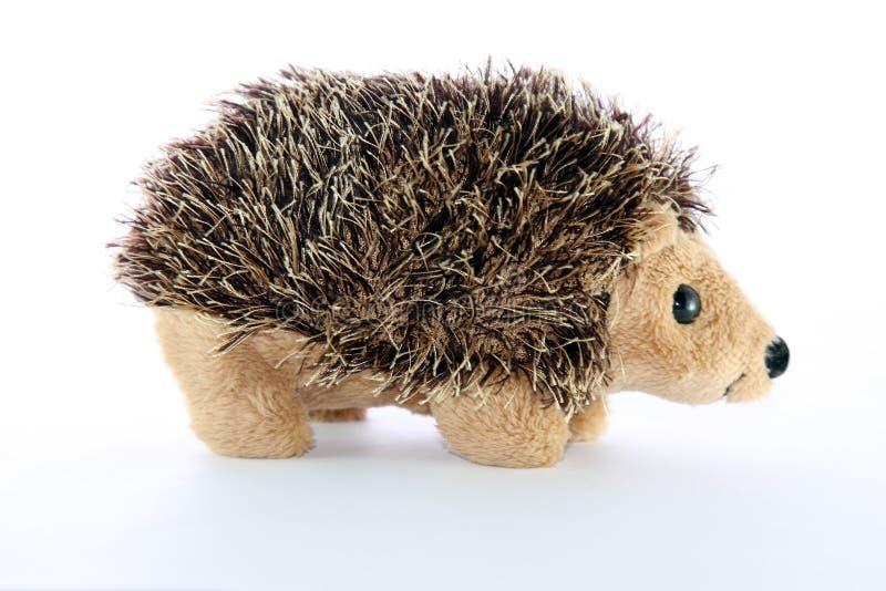 Hedgehogs imagens de stock royalty free