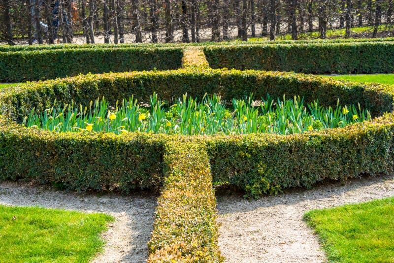 Hedger铸造了并且种植了连续和在圈子,使庭院环境美化的绿色叶茂盛灌木 免版税库存照片