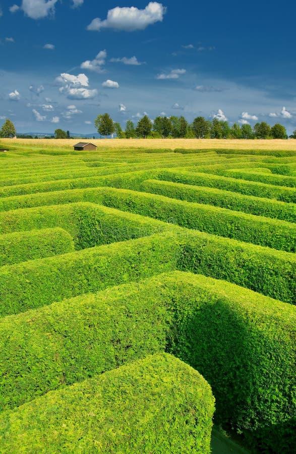 hedgerow royaltyfri bild