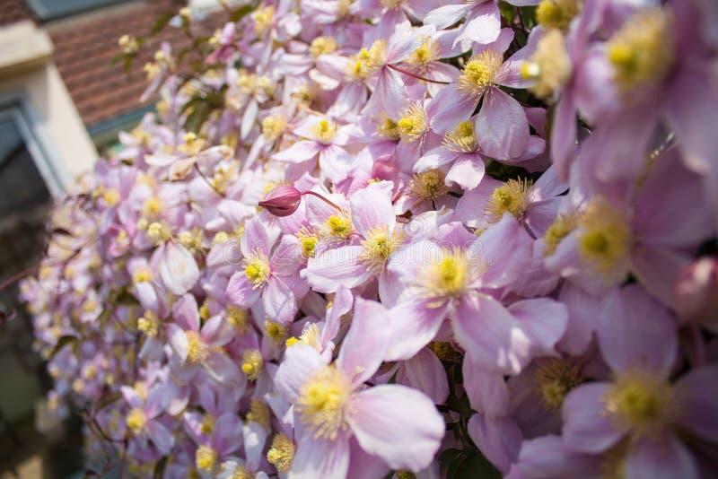 Hedgerow da flor fotografia de stock royalty free