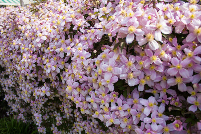 Hedgerow da flor fotos de stock