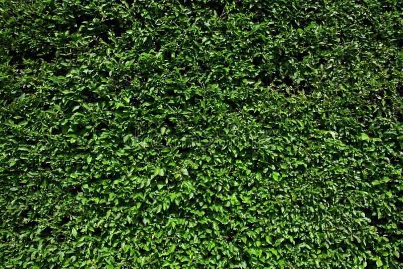 Hedgerow della casella fotografie stock libere da diritti