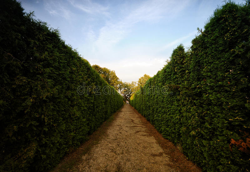 Hedgerow stock images