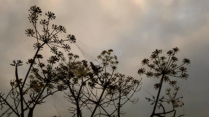 Hedgerow silhouette stock photography