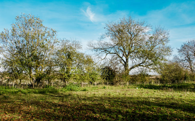 Hedgerow trees in autumn sun. Hedgerow trees in early morning autumn sun, English countryside stock photography