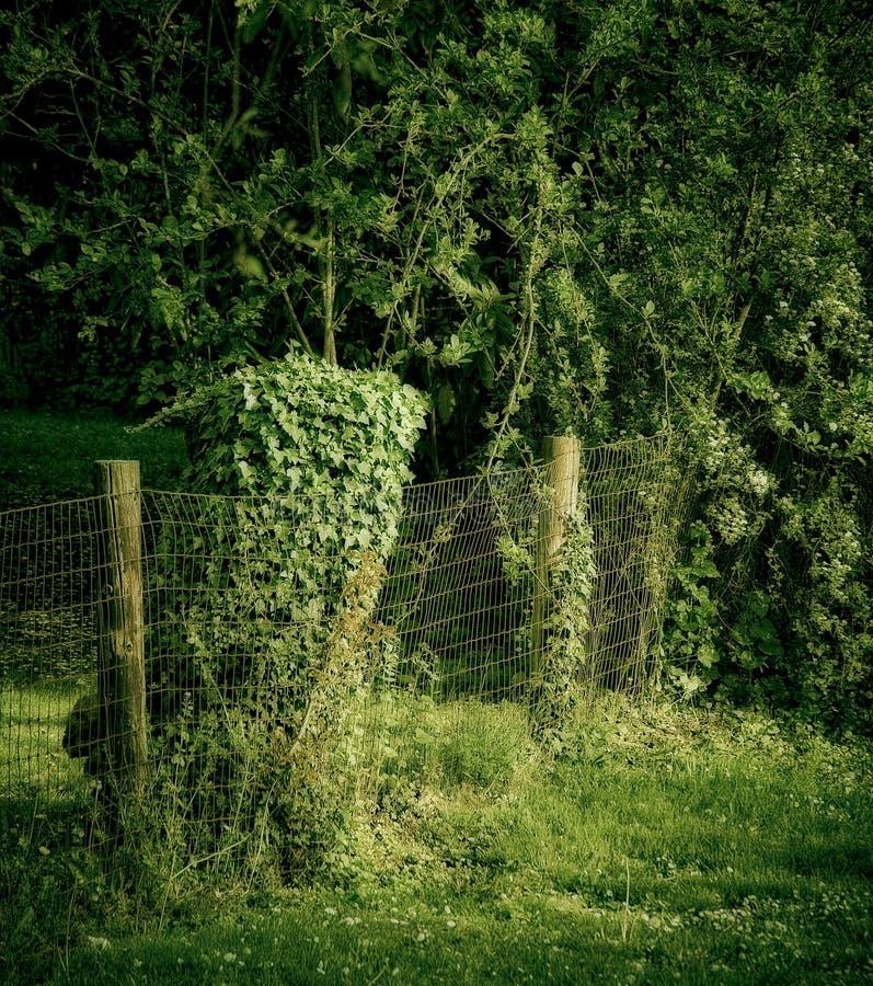 Hedgerow verde fotografia de stock