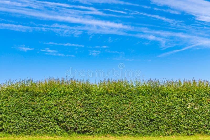 Hedgerow w Angielskiej wsi obrazy stock